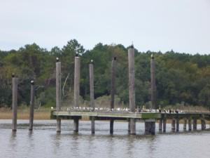 Bird dock